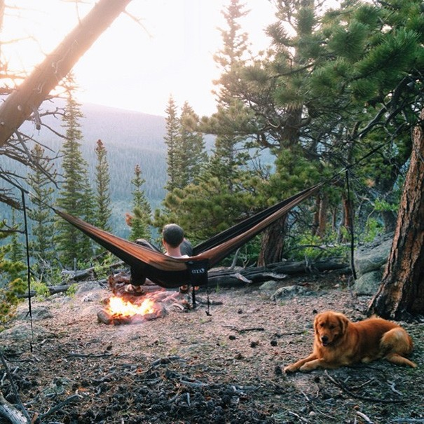 traveling-dog-aspen-the-mountain-pup-instagram-6