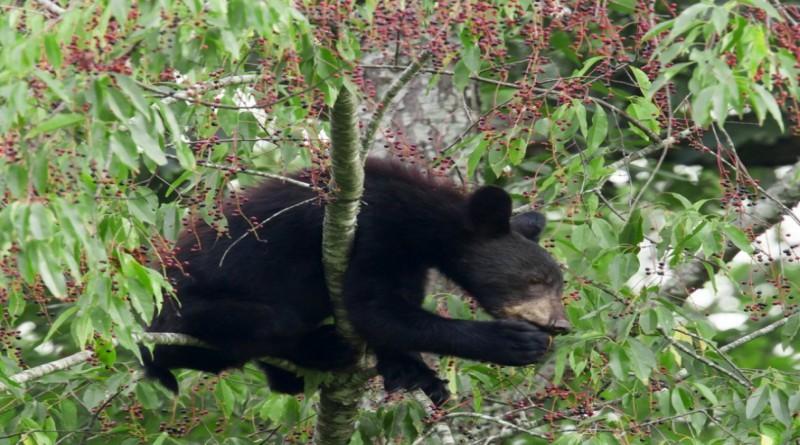Νέο τροχαίο με θύμα αρκουδάκι στον δρόμο Δισπηλιού – Κορησού