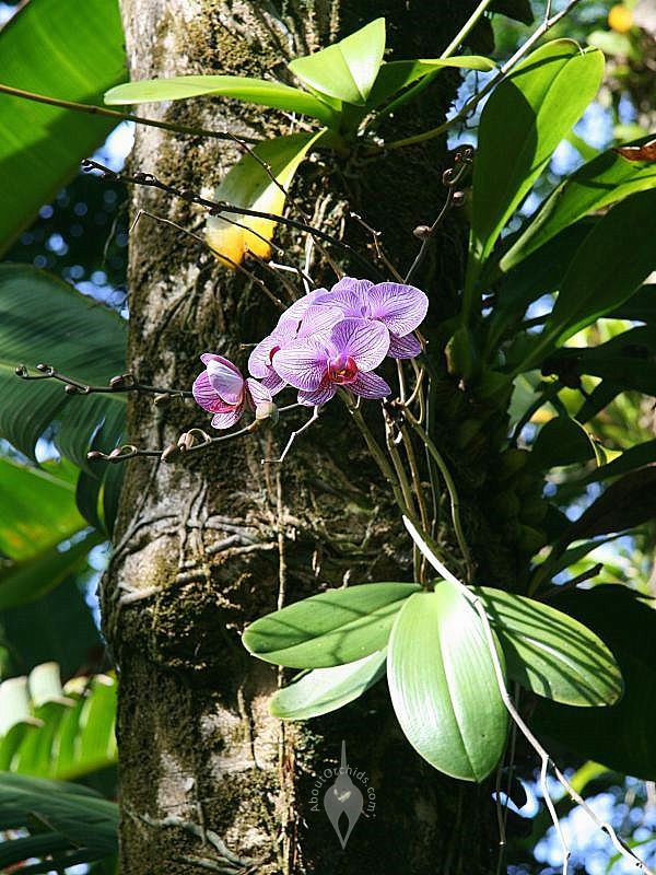 epiphytic orchids and trees relationship problems