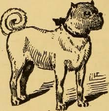 clip art pit bull