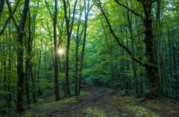 Forest Bathing Monte Faito Penisola Sorrentina