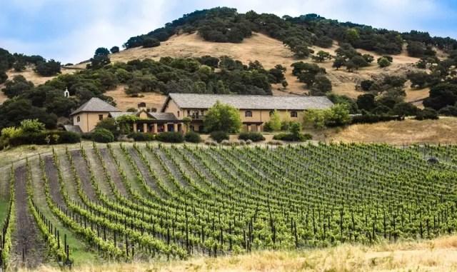 Виноградники в США