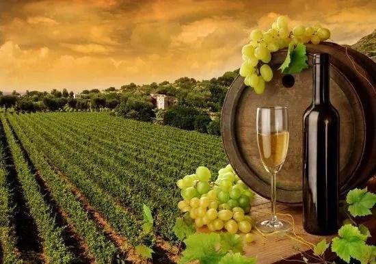 Крымское вино едет в Китай и Египет?