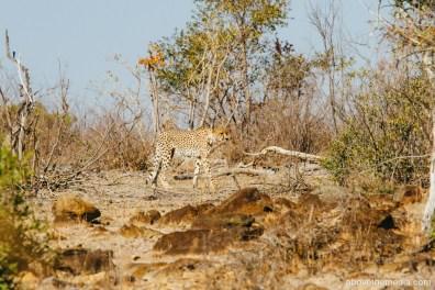 Kruger-National-Park-2016-150