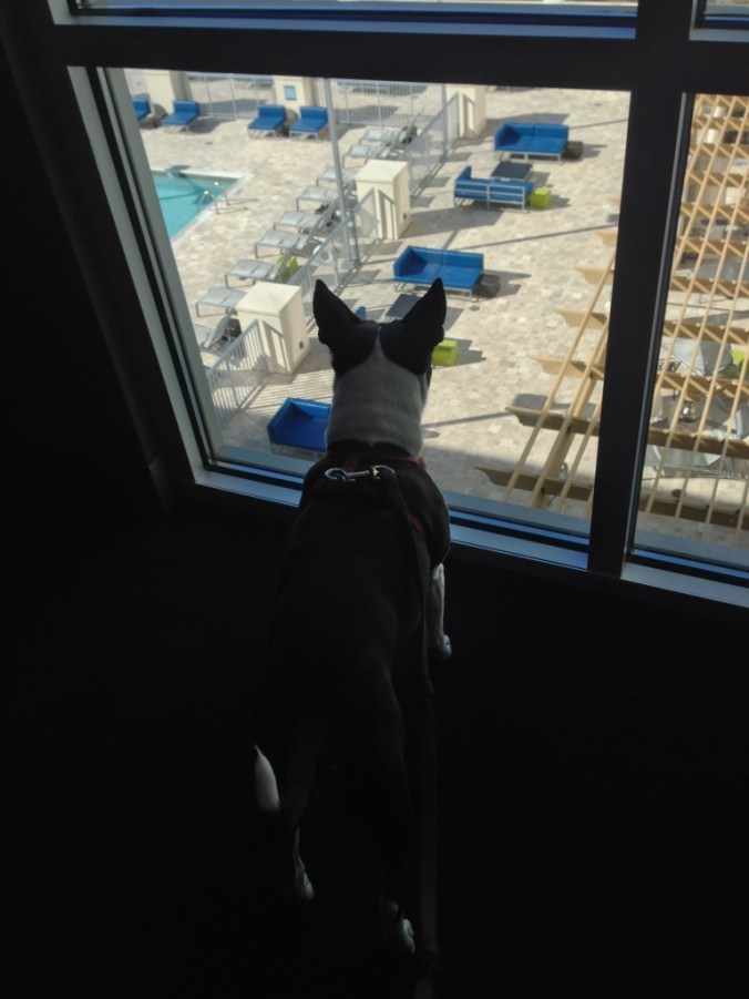 Tak enjoying the view at the Aloft in Asheville