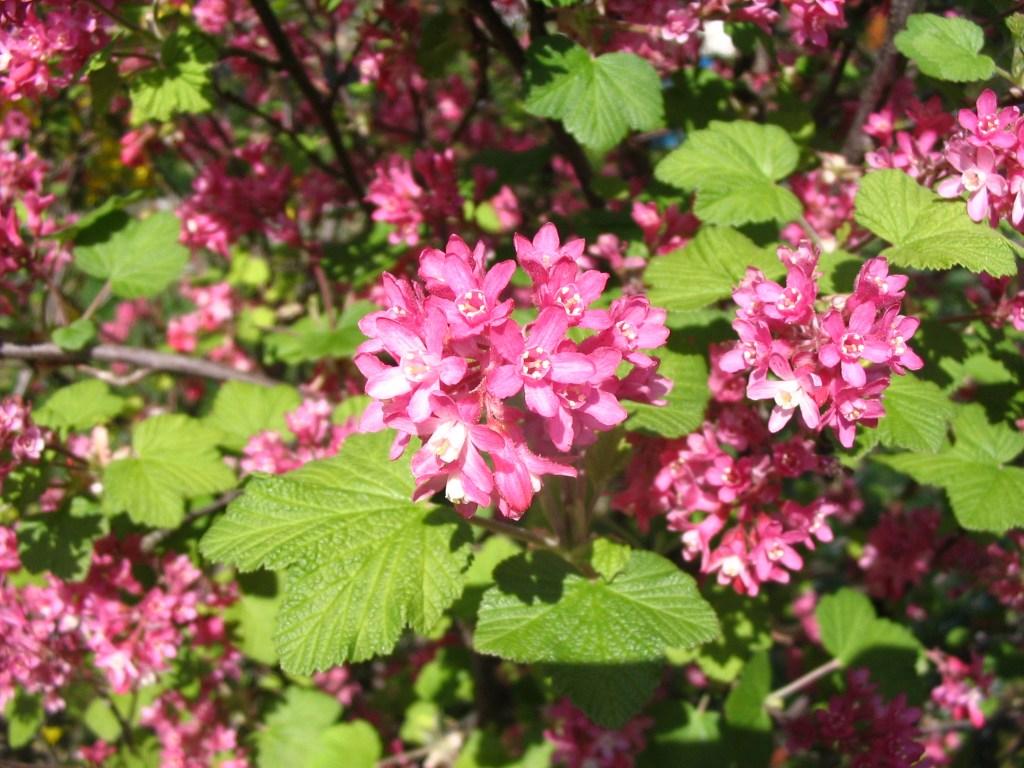 fleur vivace longue floraison abri jardin bois france. Black Bedroom Furniture Sets. Home Design Ideas
