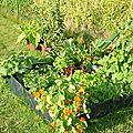que planter dans une jardinière