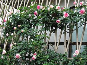 Support De Rosier Grimpant Abri Jardin Bois France