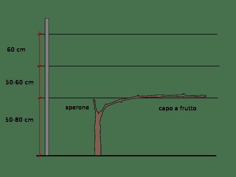 taille de formation d'une treille