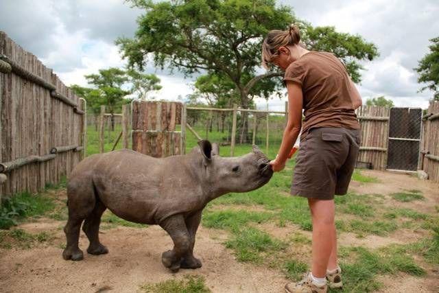 baby rhino feed
