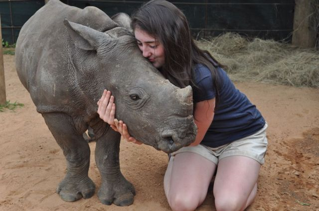 baby rhino orphan hug