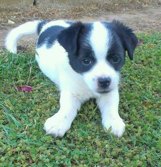 Coco, 1º clasificado cachorros