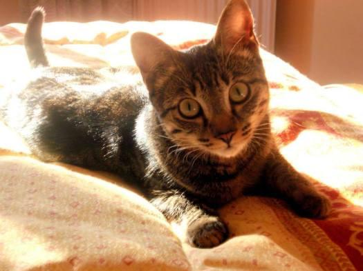 Kira, 3º gatos adultos