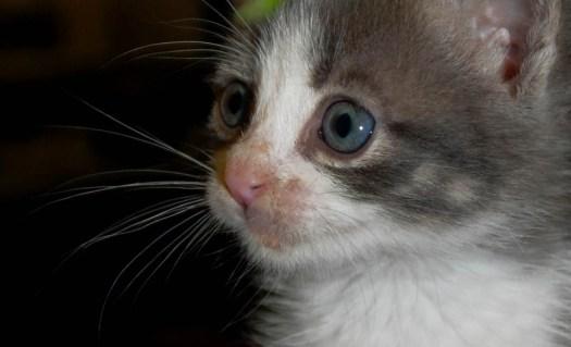 gatito3