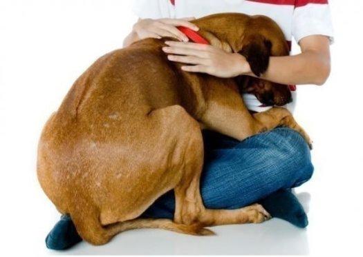 Dependencia excesiva del perro hacia su amo