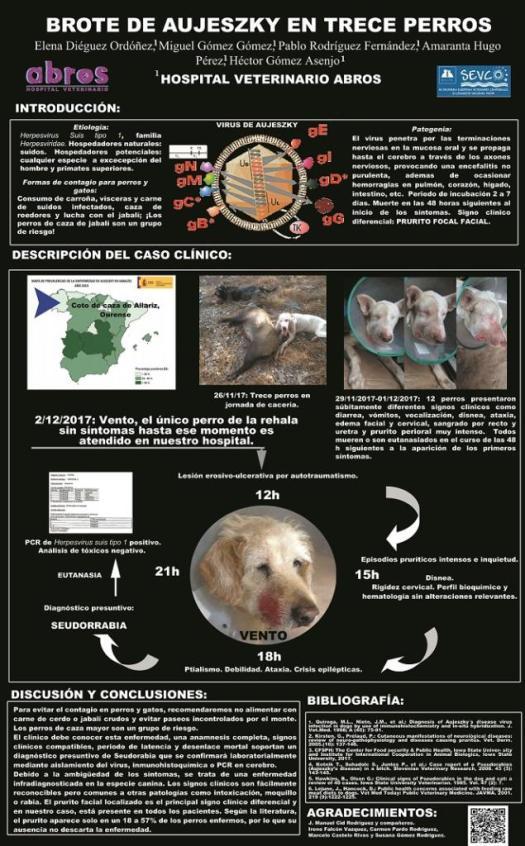 celulitis facial en perros