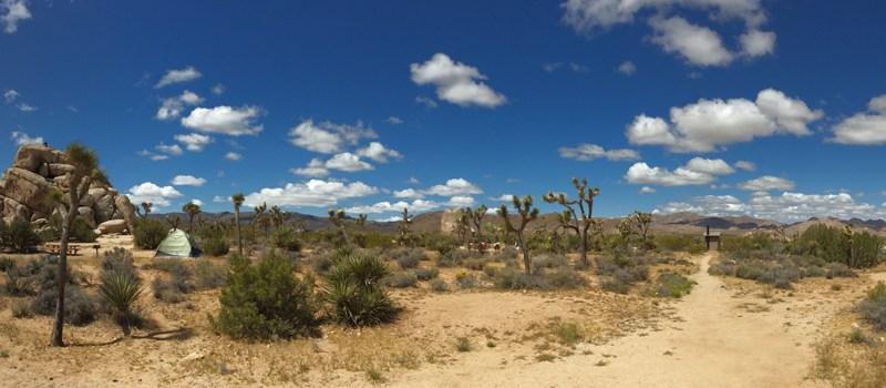 Panorama Foto Joshua-Tree