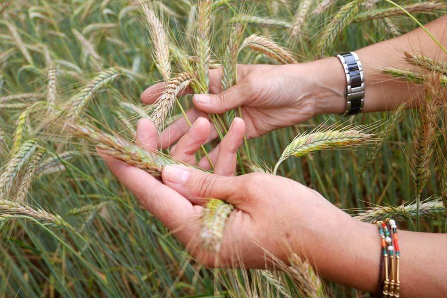 Qualité de graines