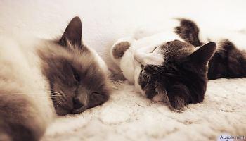 """Résultat de recherche d'images pour """"petit chat en vacances animé"""""""