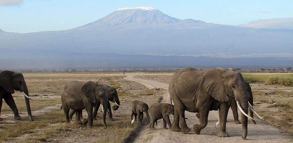 Kenya Holiday Safaris