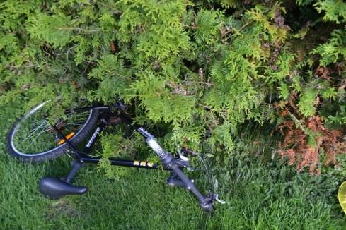 Spray på sykkelen innunder thujaen (sykkelen skal kastes da, bare jeg får av det bakhjulet som jeg skal bruke til noe kult)....