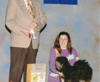 Showing the Lhasa apso - Oreo Cookie by Absosengkye owner and breeder Kimberly Logue and AKC Judge at Great Barrington Dog Show.