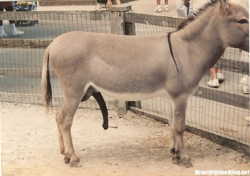 dimensione erezione cavallo