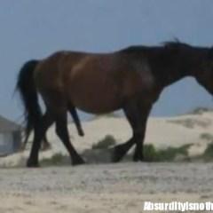 Horse Dick - Il pene del cavallo