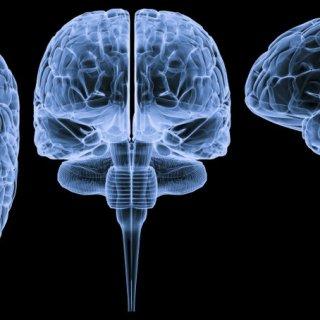 100 curiosità sul corpo umano che non tutti sanno - Il Cervello