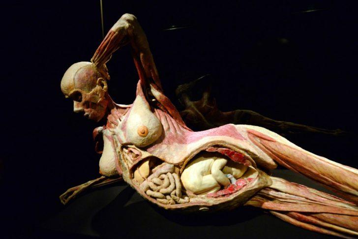 100 curiosità sul corpo umano che non tutti sanno - Gli Organi Interni