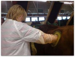 Mucche col buco