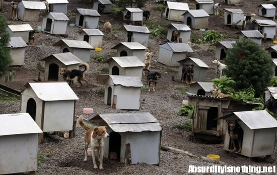 The Dog Favela - La prima favela per Cani