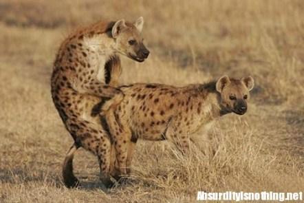19-Amazing-Animals-Captured-While-Making-Love-001