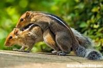 19-Amazing-Animals-Captured-While-Making-Love-004