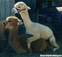 19-Amazing-Animals-Captured-While-Making-Love-012