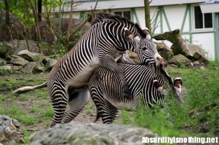 19-Amazing-Animals-Captured-While-Making-Love-015