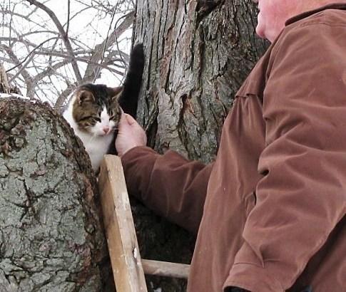 gatto vive su un albero