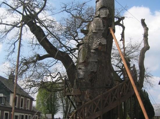 Cappella di Oak ad Allouville-Bellefousse (1)