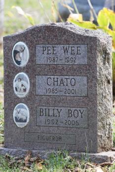 New York permette alle persone di essere sepolte con i propri animali domestici (2)