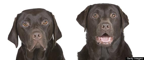 Clonare gratuitamente il proprio cane