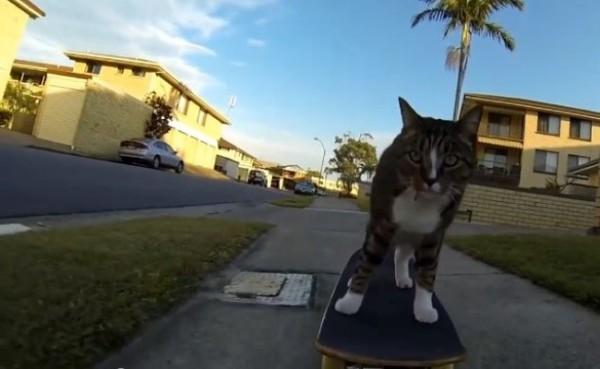 Didga, il gatto skater