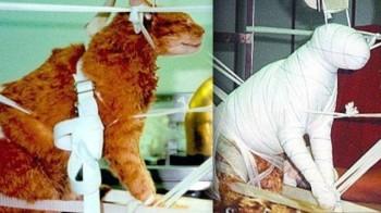 Società americana permette la mummificazione di uomini e animali (2)