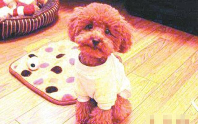 Donna cinese mangia le palle di pelo del suo cane