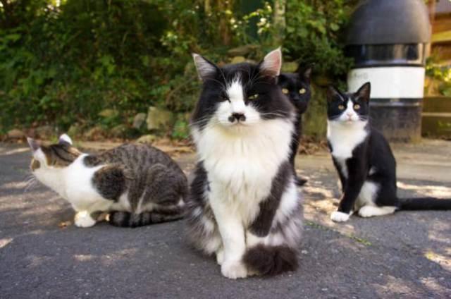 Tashirojima l'isola dei gatti