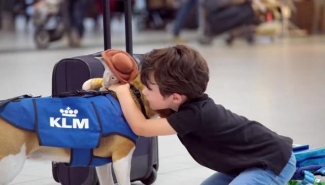 Sherlock, il cane che riporta gli oggetti smarriti in aereo ai proprietari (2)