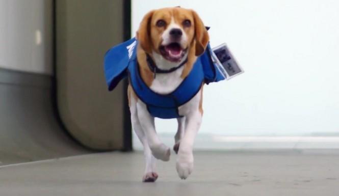 Sherlock, il cane che riporta gli oggetti smarriti in aereo ai proprietari (1)