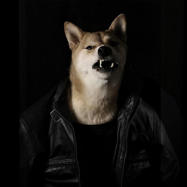 Bodhi, il cane di NY che è diventato un top model di abbigliamento maschile (4)