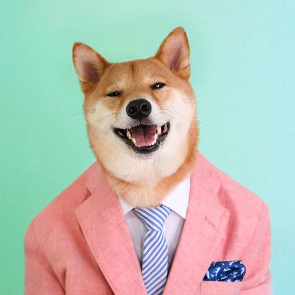 Bodhi, il cane di NY che è diventato un top model di abbigliamento maschile (1)