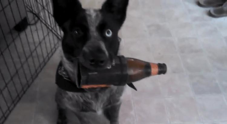 Cane migliore amico dell'uomo porta la birra