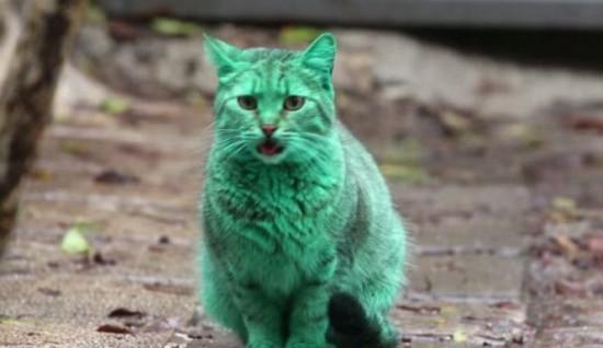 Il gatto che, inspiegabilmente, è diventato verde